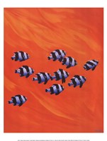 10 Black-Tailed Humbugs Fine Art Print