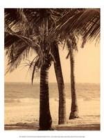 Palm Beach II Fine Art Print