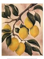 Italian Harvest - Lemons Fine Art Print