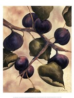 """Italian Harvest - Figs by Doris Allison - 12"""" x 16"""""""