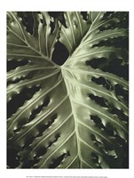 "Tropica I by Boyce Watt - 12"" x 16"""