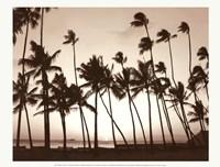 Platinum Palms I Fine Art Print