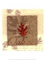 "Oak by Tandi Venter - 12"" x 14"", FulcrumGallery.com brand"