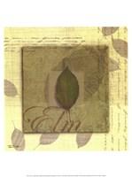 """Elm by Tandi Venter - 12"""" x 16"""""""