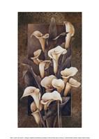 Golden Calla Lilies Fine Art Print
