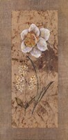 "Antique Daffodil by Stefania Carlini - 12"" x 24"""