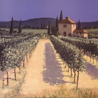 "Vineyard Shadows by David Short - 20"" x 20"""