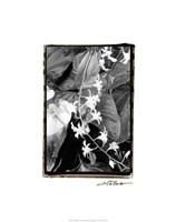 "Floral Elegance I by Laura Denardo - 19"" x 24"""