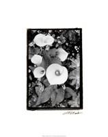 """Floral Elegance II by Laura Denardo - 19"""" x 24"""""""