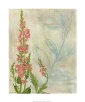 Spring Harvest I Framed Print