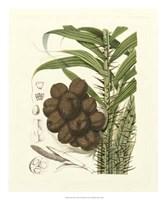 """Island Fruits I by Berthe Hoola Van Nooten - 20"""" x 24"""""""