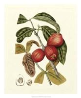 """Island Fruits III by Berthe Hoola Van Nooten - 20"""" x 24"""""""