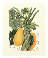 """Island Fruits IV by Berthe Hoola Van Nooten - 20"""" x 24"""""""