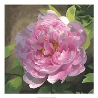 """Peony In Pink I by Megan Meagher - 22"""" x 22"""""""