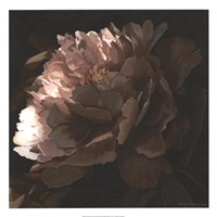 """Moonlit Peony II by Megan Meagher - 22"""" x 22"""""""