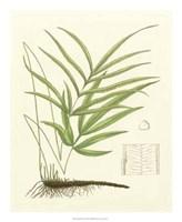"""Eaton Ferns I by Gerard Paul Deshayes - 18"""" x 22"""""""