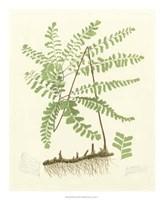 """Eaton Ferns II by Gerard Paul Deshayes - 18"""" x 22"""""""