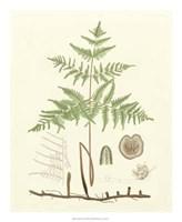 """Eaton Ferns III by Gerard Paul Deshayes - 18"""" x 22"""""""
