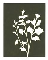 Four Seasons Foliage II Framed Print