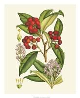 "Crimson Berries I by Gerard Paul Deshayes - 18"" x 22"""