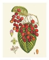 """Crimson Berries II by Gerard Paul Deshayes - 18"""" x 22"""""""