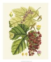 """Crimson Berries III by Gerard Paul Deshayes - 18"""" x 22"""""""