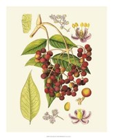 "Crimson Berries IV by Gerard Paul Deshayes - 18"" x 22"""