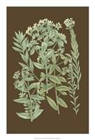 "Organic Greenery I by Gerard Paul Deshayes - 15"" x 22"""
