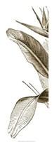 Bird Of Paradise Triptych I Giclee