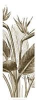 Bird Of Paradise Triptych II Giclee