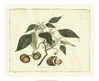 "Delicate Botanical II - 22"" x 18"""