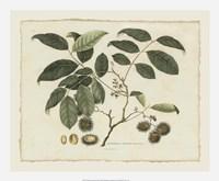 """Delicate Botanical III - 22"""" x 18"""""""