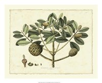 "Delicate Botanical IV - 22"" x 18"""