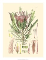 """Floral Passion IV - 17"""" x 22"""""""