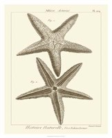 """26"""" x 32"""" Starfish Pictures"""