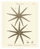 "Striking Starfish III - 26"" x 32"""