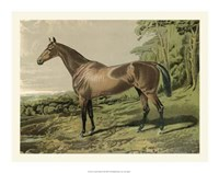 """Cassell's Horse IV - 20"""" x 16"""""""