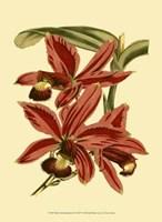"""Mini Orchid Splendor II - 10"""" x 13"""""""