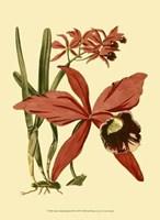 "Mini Orchid Splendor III - 10"" x 13"""