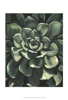 Printed Lunar Succulent I Framed Print