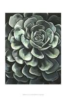 Printed Lunar Succulent II Fine Art Print