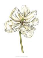 "Tulip Beauty II by Jennifer Goldberger - 10"" x 13"""
