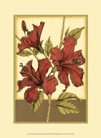 Printed Sophisticated Hibiscus II Framed Print