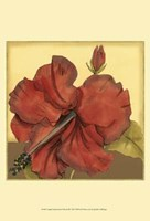 """Cropped Sophisticated Hibiscus III by Jennifer Goldberger - 13"""" x 19"""""""