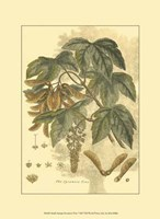 Small Antique Sycamore Tree Fine Art Print