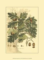 Small Antique Oak Tree Fine Art Print