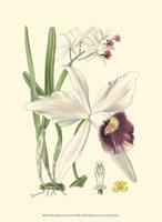 """Mini Delicate Orchid II - 10"""" x 13"""""""