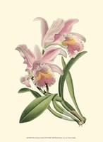 """Mini Delicate Orchid III - 10"""" x 13"""""""
