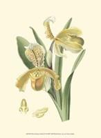 """Mini Delicate Orchid IV - 10"""" x 13"""""""