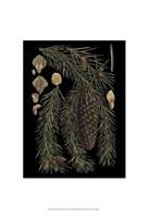 "Small Dramatic Conifers III - 13"" x 19"" - $12.99"